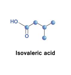 methylbutanoic isovaleric acid vector image vector image