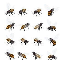 Honey bee set on white background Flat 3d vector image