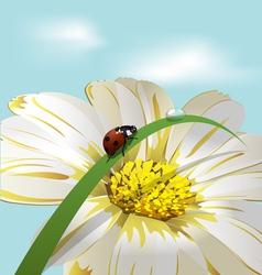 ladybird on herb vector image