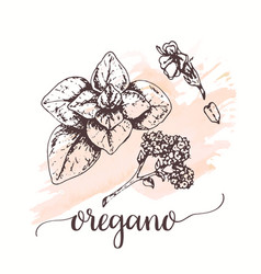 oregano for tags cards vector image