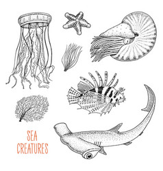 Sea creature nautilus pompilius jellyfish and vector