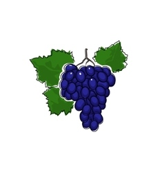 Grapes Isolated on White vector image