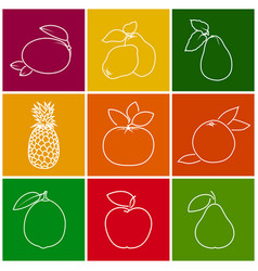 Tropical citrus fruit linear icons vector