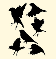 zebra finch birds animal silhouette vector image