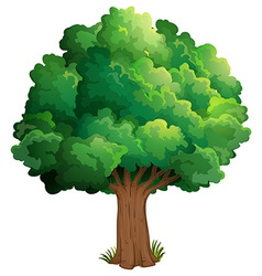 A tree at the forest vector image