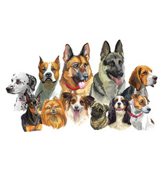 big and small dog breeds 2 vector image