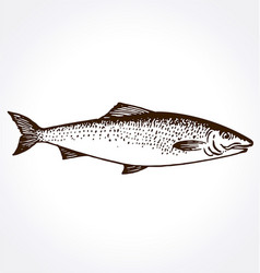 Fish trout salmon hand drawn vector