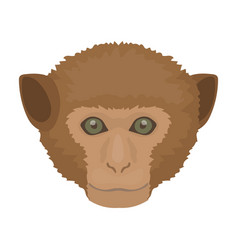 monkey icon in cartoon style isolated on white vector image
