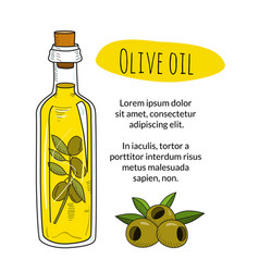 Colorful hand drawn olive oil bottle with sample vector