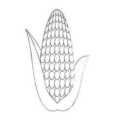 fresh corn cob icon vector image