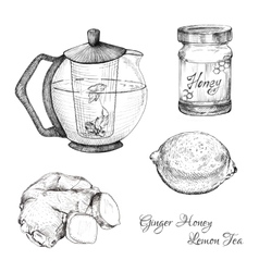Ginger honey lemon tea ink sketches set vector image