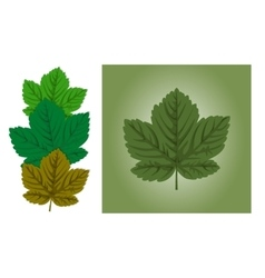 Maple leaf background vector image