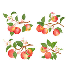 Watercolor apple branches leaves and flowers vector