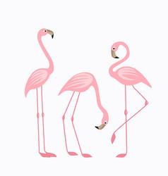 tropical bird flamingos vector image vector image
