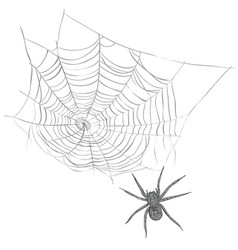 A spider weaves a spider web vector