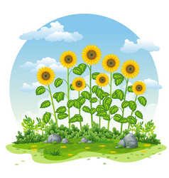 An landscape with sunflowers vector