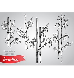 set hand drawn bamboo branches vector image