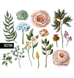 set peachy english roses vector image