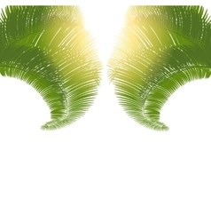 The leaves of palm trees at sunrise on a white vector image