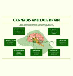 Cannabis and dog brain horizontal infographic vector