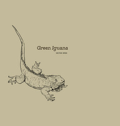 green iguana lizard hand draw sketch vector image