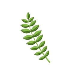 Green stem with many oval leaves vector