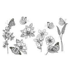 Hand drawn monochrome wildflowers and vector