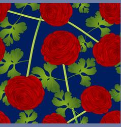 Red ranunculus flower on blue background vector