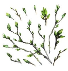 Watercolor spring branches vector