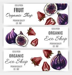 Fruit banner for eco store with fig and strawberry vector