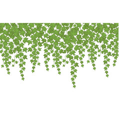 Green ivy wall climbing plant hanging from above vector