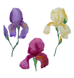 iris flowers watercolor set vector image