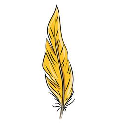 orange feather on white background vector image