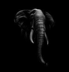portrait of an elephant head on a black background vector image