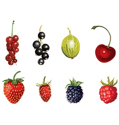 Ripe berries vector