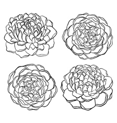 set of black and white flower isolated vector image vector image