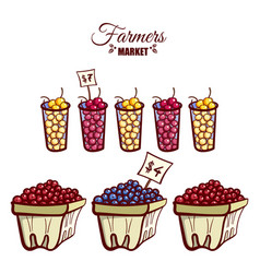 farmers market ripe berries vector image