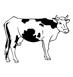 drawing a cow vector image vector image