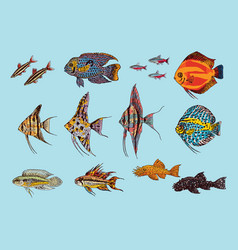 beautiful aquarium fishes collection vector image