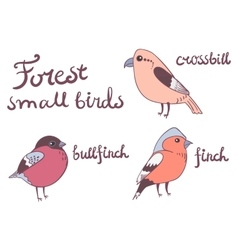 Forest little birds collection vector image