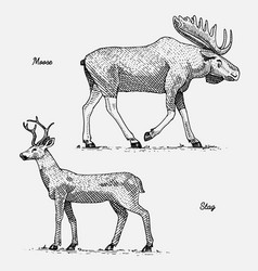 moose or eurasian elk and stag or deer hand drawn vector image vector image