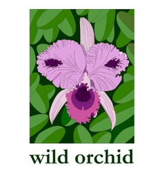 Wild Orchid vector image