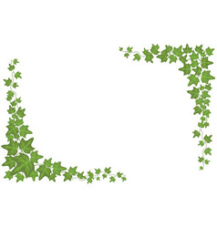 decorative green ivy wall climbing plant vector image