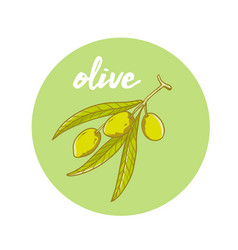 hand drawn olive oil vector image