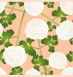 White ranunculus flower on salmon pink background vector