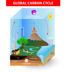 carbon cycle diagram vector image vector image
