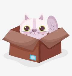 cute scared cat in box domestic cartoon animal vector image
