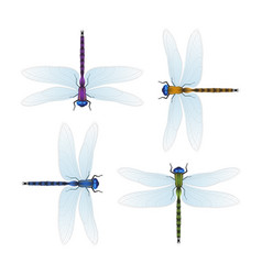 Four varicolored dragonflies on a white background vector
