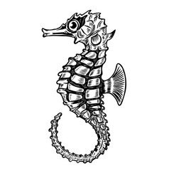 Seahorse isolated on white background design vector