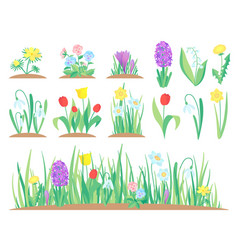 spring flowers garden tulip flower early floral vector image